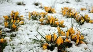 snowymarch
